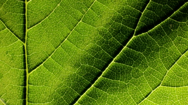 close up of structure green leaves texture background - back lit stock videos & royalty-free footage