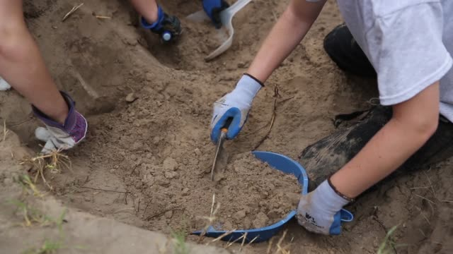close up of students digging anthropologist unearths immigrant remains from texas burial site on may 21 2013 in falfurrias texas - archaeology stock videos & royalty-free footage