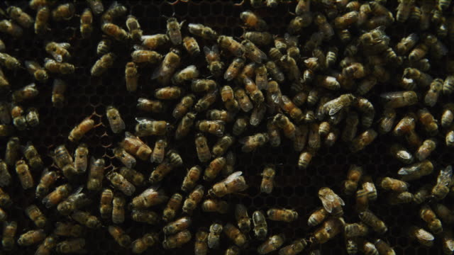 close up of swarm of crawling bees / spring city, utah, united states - tiergruppe stock-videos und b-roll-filmmaterial