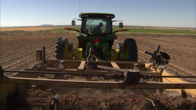Close up of the combine's track as it gathers potatoes from the ground and moves them to the side.