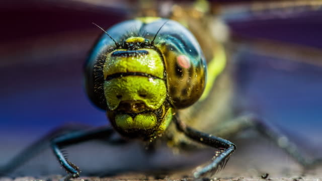close up of the compound eye from dragonfly - insect stock videos & royalty-free footage