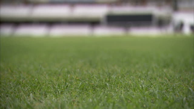 vidéos et rushes de close up of the grass at the oval, as groundskeepers work in the distance. available in hd. - turf