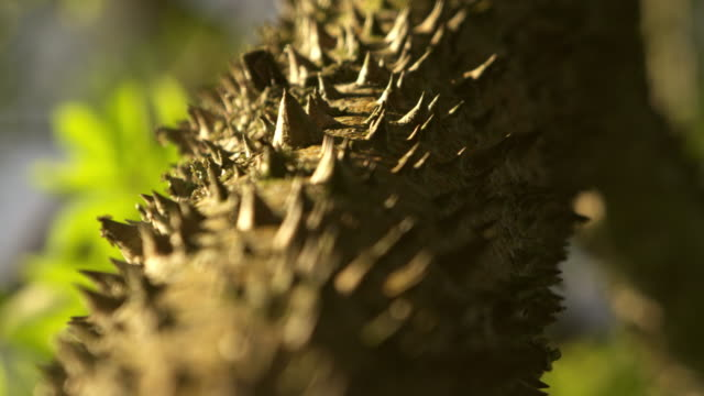 Close up of thorny tree trunk
