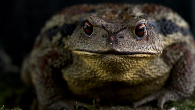 close up of toad - ugliness stock videos & royalty-free footage