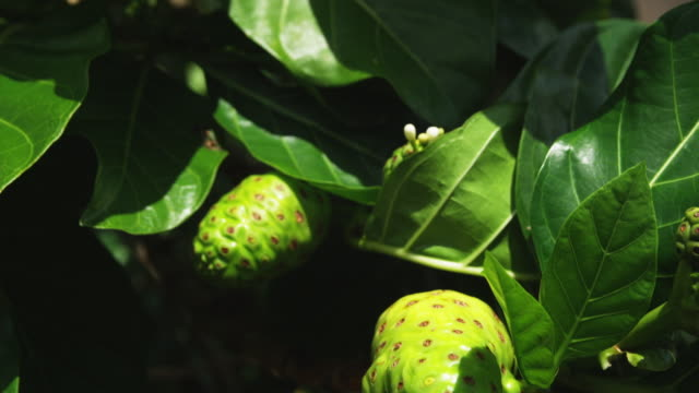 close up of tropical plants