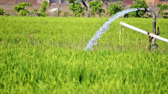 close up of water hose pumping clear water into green paddy farm field for irrigation in a morning sunlight in the countryside - irrigation equipment stock videos & royalty-free footage