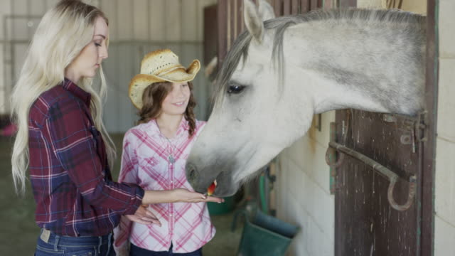 close up of woman and girl feeding and petting horse in stable / lehi, utah, united states - lehi stock videos & royalty-free footage