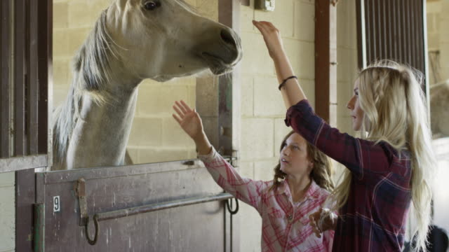 close up of woman and girl petting horse in stable / lehi, utah, united states - lehi stock videos & royalty-free footage