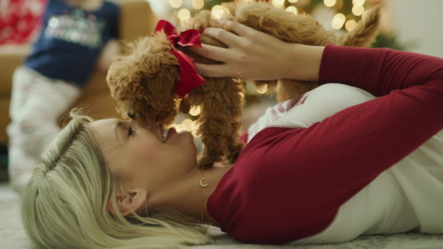 close up of woman laying on floor playing with dog on christmas / vineyard, utah, united states - dog knotted in woman stock videos & royalty-free footage