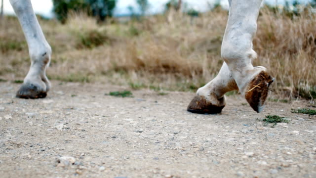 Close up on a horse walking