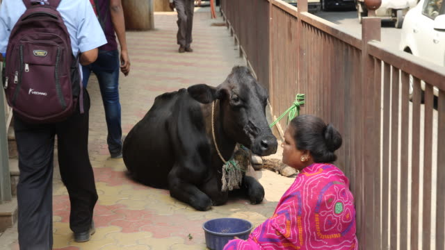 A close up on a woman in a purple sari and a black cow sitting on a narrow sidewalk between a street corner and a traffic road