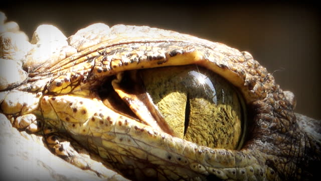 close up on eye crocodile. - animal eye stock videos & royalty-free footage