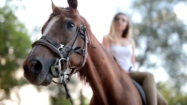 vídeos de stock, filmes e b-roll de close-up no cavalo equitação feminino - montar um animal
