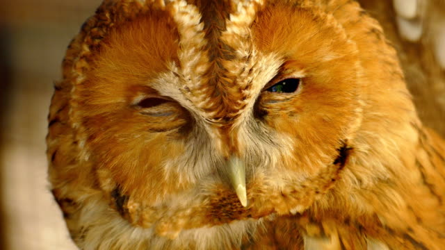 close up - owl head - animal eye stock videos & royalty-free footage
