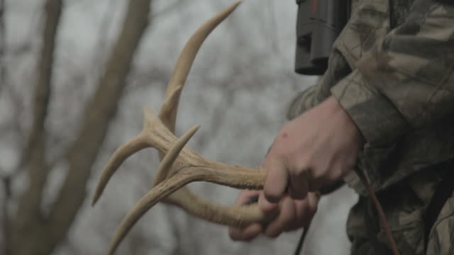Close up pair of deer antlers held in the hands of a hunter. He slaps the antlers together hoping to attract a deer to shot.