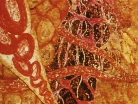 vídeos de stock e filmes b-roll de 1982 animation close up pan blood flowing through the body / blood cells in bloodstream - fluxo sanguíneo sistema cardiovascular