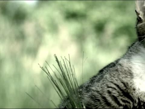 vídeos y material grabado en eventos de stock de close up pan cat standing on hind legs near birdbath / meowing and pawing - baño para pájaros
