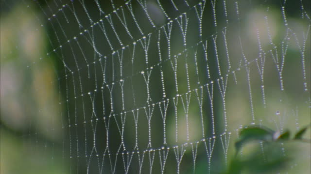 close up pan to spider in center of spider web / satsumasendai, kagoshima prefecture, japan - arachnid stock videos and b-roll footage