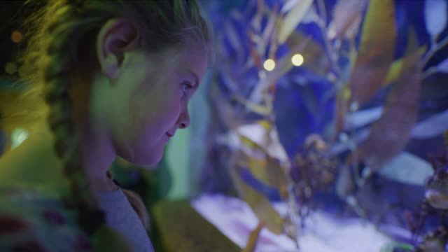 Close up panning shot of girl watching seahorses swimming in aquarium / Draper, Utah, United States