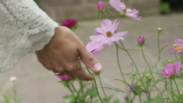 close up panning shot of womanåõs hand touching flower / lehi, utah, united states - lehi stock videos & royalty-free footage