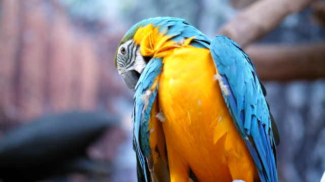 close up parrot, blue-and-yellow macaw - saturated colour stock videos & royalty-free footage