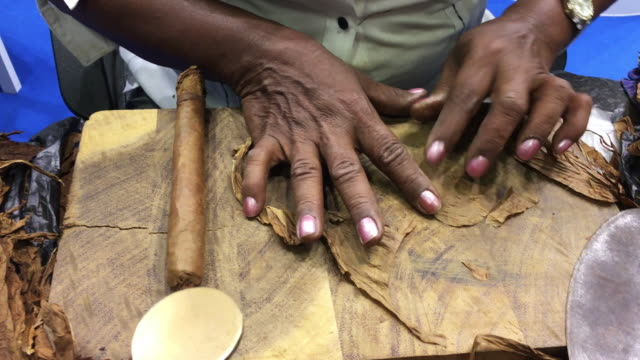 close up, person prepares cigar - sigaro video stock e b–roll