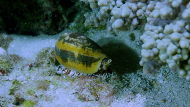 close up perspective of snail in coral reef - animal shell stock videos & royalty-free footage