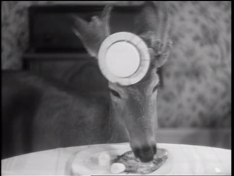 1938 B/W close up pet deer wearing hat eating from plate at dining room table