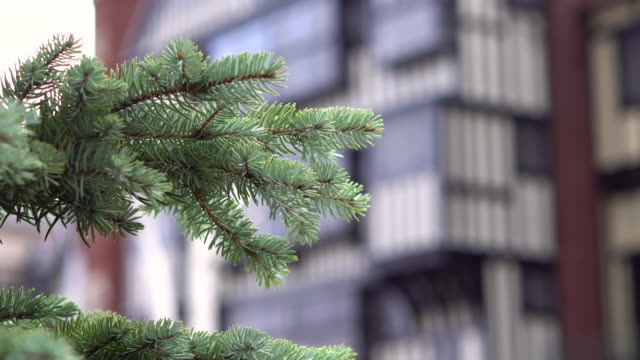 close up pine tree branch christmas tree in city - celebrity sightings stock videos & royalty-free footage