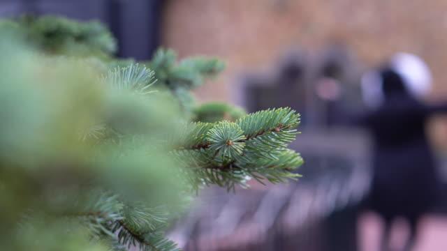 close up pine tree branch christmas tree - celebrity sightings stock videos & royalty-free footage