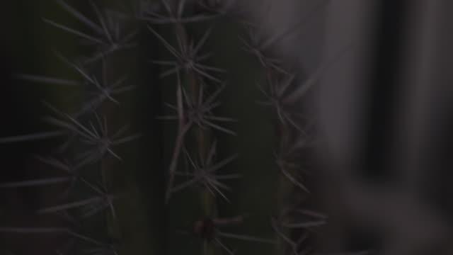 close up, prickly cactus - dornig stock-videos und b-roll-filmmaterial