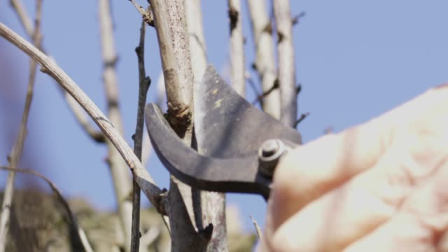 close up pruning shears pruning tree branches,slow motion - pruning stock videos & royalty-free footage