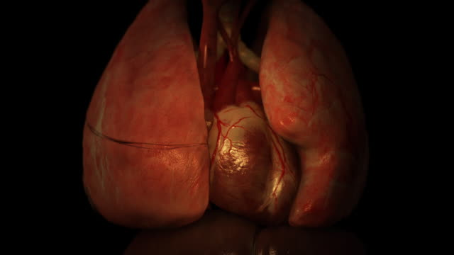 vídeos de stock, filmes e b-roll de close up push-in - parasites travel through a spinal column behind a heart and lungs in a computer-generated animation. - coração humano