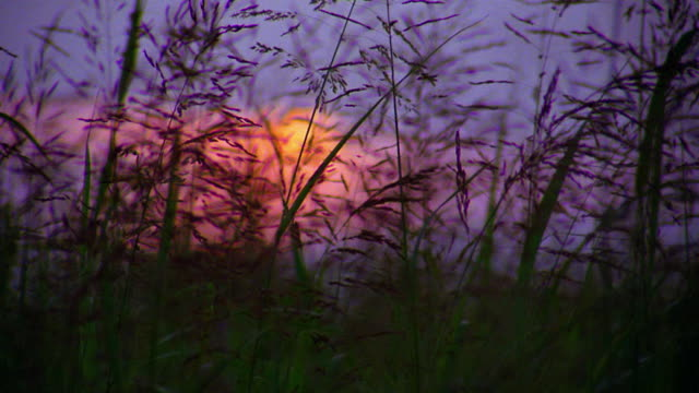 close up rack focus silhouetted stalks of grain blowing in wind with sunset and clouds in background / oklahoma - oklahoma stock-videos und b-roll-filmmaterial