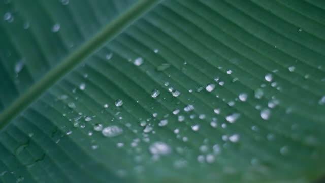 緑の葉に雨の滴を閉じます。 - 水の形態点の映像素材/bロール