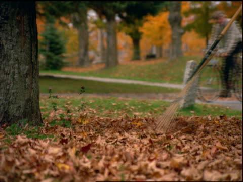 close up rake sweeping autumn leaves into pile / man passes on bicycle in background / Vermont