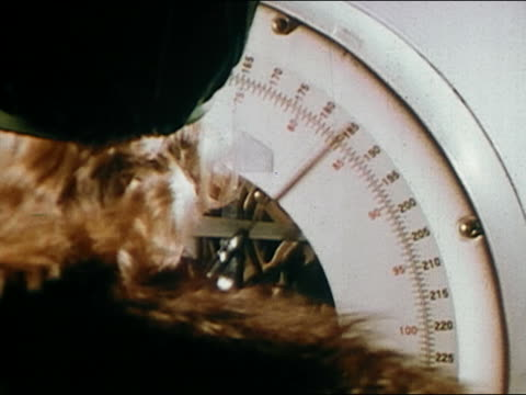 1966 close up rear view of woman standing on scales and looking at weight / audio - waage gewichtsmessinstrument stock-videos und b-roll-filmmaterial