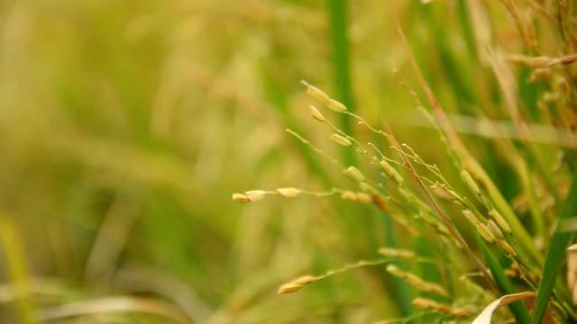 クローズアップ右側のベア穀物製品 - 農家の家点の映像素材/bロール