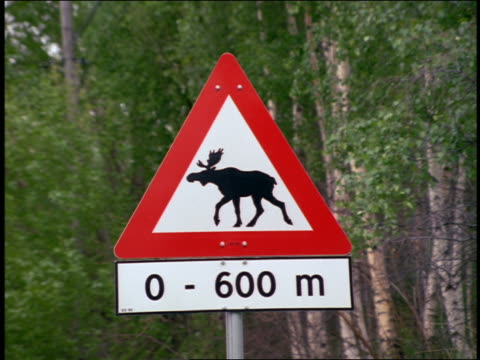close up road sign warning of moose crossing / romsdal, norway - herbivorous stock videos & royalty-free footage