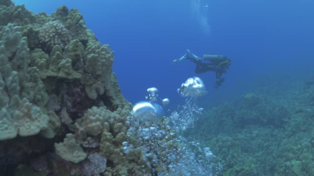 close up: scuba diver swimming over coral reef, bubbles rising - hawaiian culture stock videos & royalty-free footage