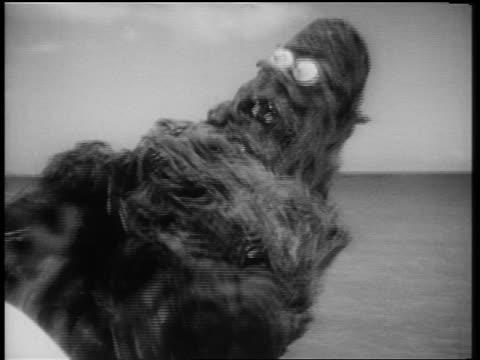 b/w 1961 close up sea monster turning with claws in air - monster fictional character stock videos & royalty-free footage