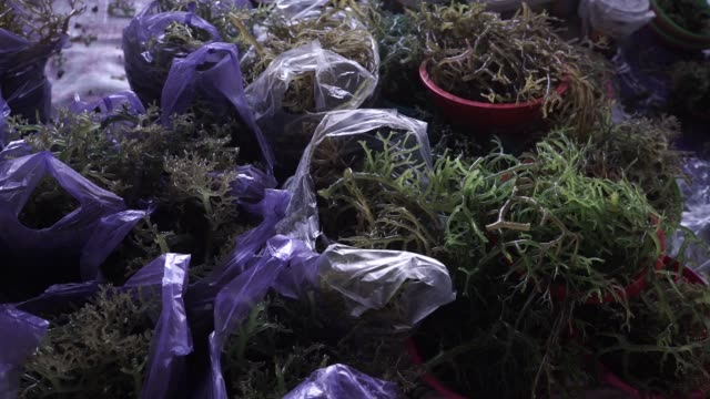 close up seaweed sit in baskets at a stall in the fish market area of the central market in kota kinabalu sabah malaysia on sunday july 30 close up... - seaweed stock videos & royalty-free footage