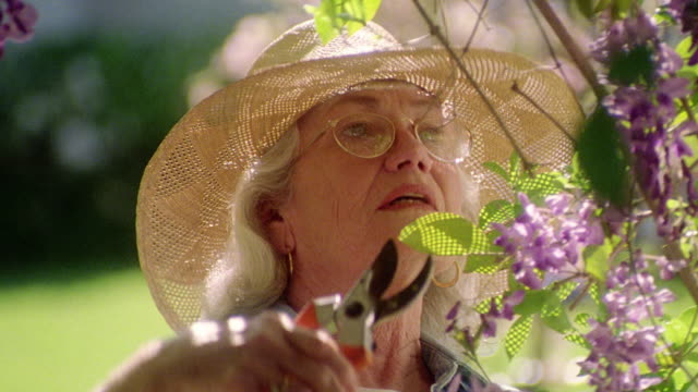 vídeos y material grabado en eventos de stock de pan close up senior woman in hat cuts purple flowers off bush / senior man gives her bouquet + kisses her - jardinería