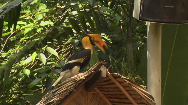 Close Up Shot Hornbill