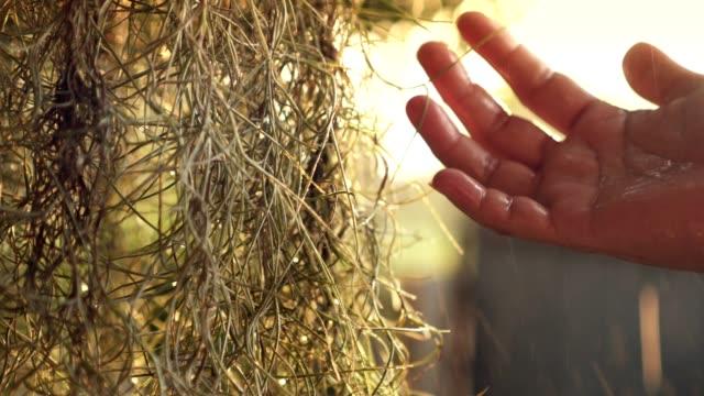 close up shot human hand touching leaf vine-plant water drop/raining beautiful sun light