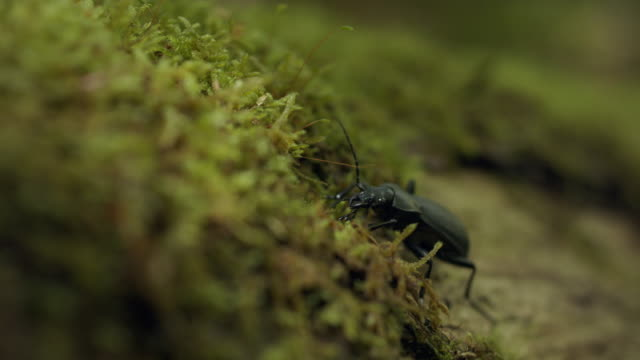 close up shot of a beetle on a log - animals in the wild stock videos & royalty-free footage
