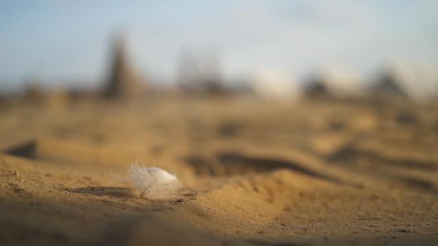 沙中鳥羽毛的特寫鏡頭 - 少於10秒 個影片檔及 b 捲影像