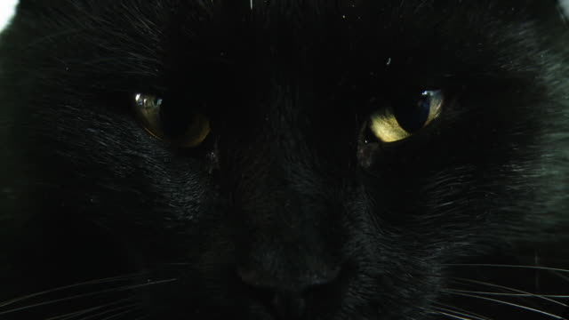 hd: close up shot of a black cat - retina stock videos and b-roll footage