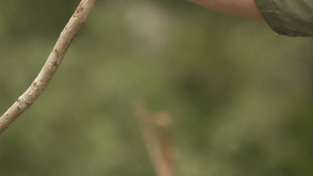 close up shot of a farm volunteer hacking a tree branch - focus on foreground stock videos & royalty-free footage