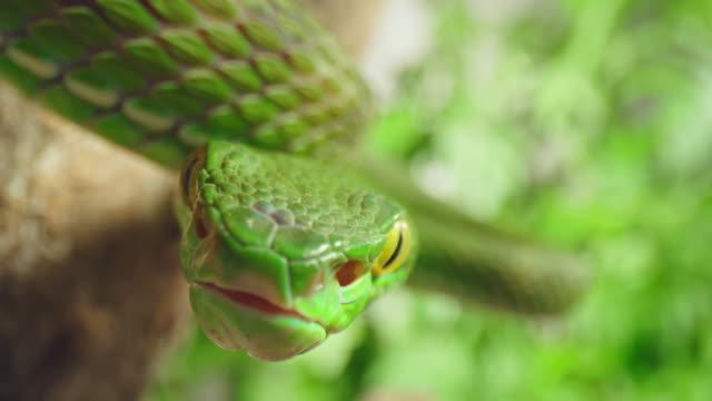 vídeos y material grabado en eventos de stock de slo mo tiro de cerca de una trampa de serpiente verde para su presa - nocivo descripción física